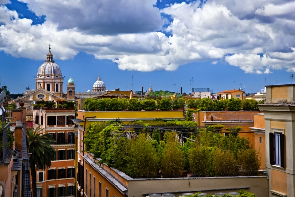 rooftop plants 3