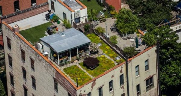 1_RooftopMeadow